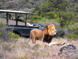 Eastern Cape Safari Greater Addo Accommodation Amakhala Game Lodge Wildlife100 Sjpeg