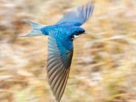 Leeuwenbosch Country House Amakhala Game Reserve Bird In Motion