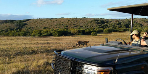 Amakhala Game Reserve Leeuwenbosch C Ountry House Game Drive Room Size