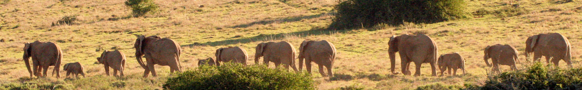 Amakhala Game Lodge Leeuwenbosch Country House Elephants  Family Sliver
